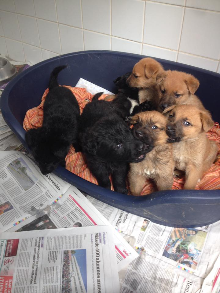 Puppies looking for a home