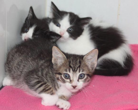 Felicity's kittens