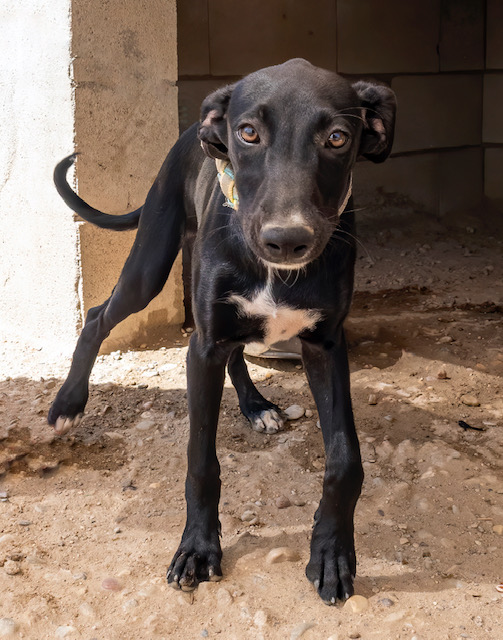 LEXI *RESERVED*